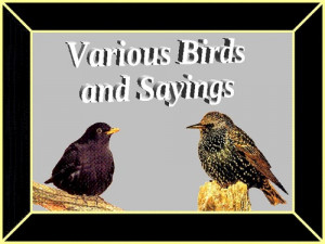 Bird Quotes Famous Sayings Quotations Pic #16