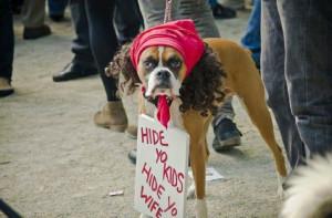 Funniest Dog Halloween Costumes Ever