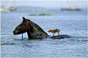 Horse Saves Blind Dog from Drowning