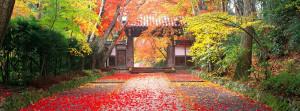 Cute Autumn Sayings Autumn in japan facebook cover