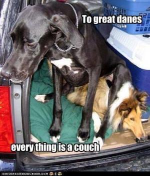 great dane funny | Has A Hotdog – greatdane – Page 10 – Loldogs ...
