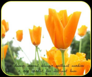 imagesbuddy.com/a-flower-cannot-blossom-without-sunshine-flowers-quote ...