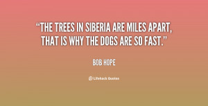 The trees in Siberia are miles apart, that is why the dogs are so fast ...