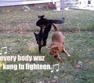 Funny pictures of animals fighting pictures 3