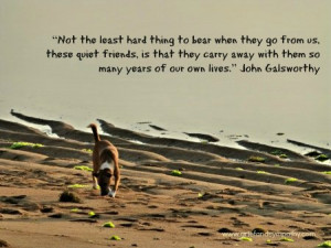 Dog Loss Quotes Dog sympathy quote card.