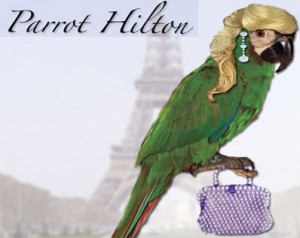 Parrot Funny Pictures 2011