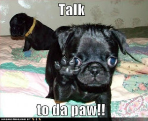 on dog training, dog breeds, dog behavior, dog care, dog health, dog ...