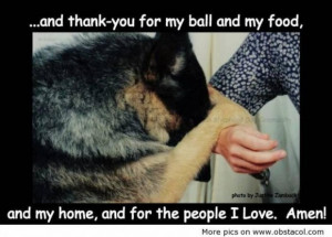 Dog love quotes and sayings