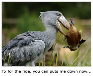 bird eating bird