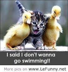 don't wanna swim