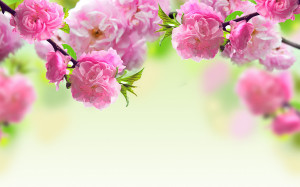 Spring flowers background Wallpapers Pictures Photos Images