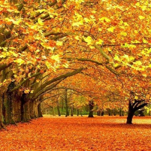 October Poems and quotes 2