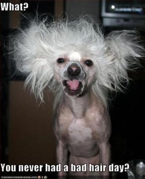 Funny Bad Hair Day Quotes bad hair day funny pictures