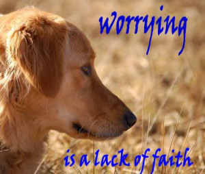 Dog Quotes (59)