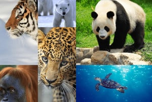Endangered-Species-Day-Leo-DiCaprio-Photo-WWF.png