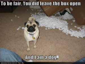 Funny Dogs-funny-dog-quotes-and-sayings