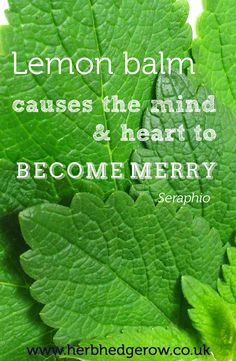 ... balm causes the heart and mind to become merry - Seraphio #herb #quote