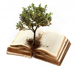 What books are my own stories grounded in?