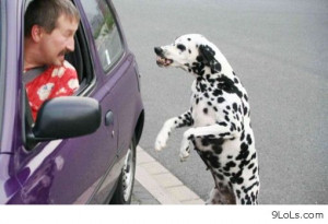 funny-summer-2013-funny-quotes-funny-funny-memes-funny-animals-funny ...