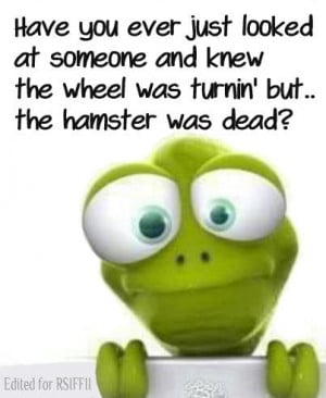 Funny Hamster Wheel Quote - Have you ever just looked at someone and ...