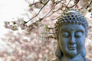 Buddha with cherry blossom