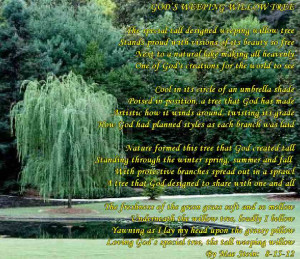 GODS' WEEPING WILLOW TREE