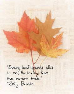 ... from the autumn tree. Emily Bronte | #fall #inspiration #quote More