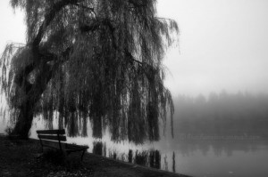 black and white photography willow tree