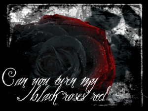 Red and Black Rose ! - roses Photo
