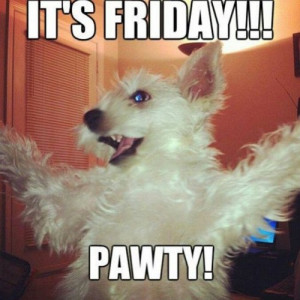 dog #party #lol #funny #true #haha #Friday #relatable