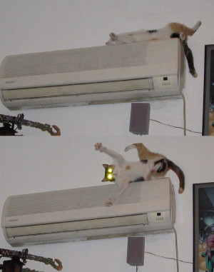 Air Conditioner CAT - Surprised! | Source : Jokes of The Day - By ...