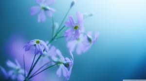 Small Purple Flower Desktop