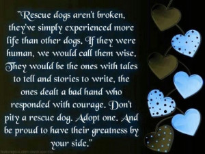Rescue dogs aren't broken, they've simply experienced more life than ...