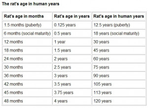 rat to human age conversion chart...rats life expectancies are not ...