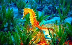 Animal - Seahorse Opus Water Green Yellow Wallpaper