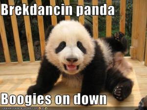 Funny panda bear