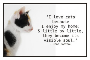 beautiful quote about cats