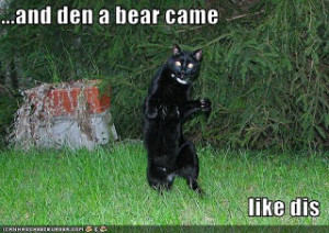 Funny black bears cubs