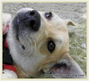 funny dog quotes new dog jpg