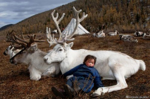 Reindeer Farm, Mongolia / Funny Pictures, Quotes, Pics, Photos, Images ...