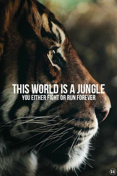 ... tigers tigers nature amazing tigers inspiration quotes beauty tigers