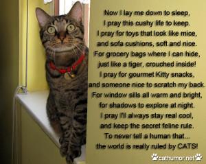Cat Prayer Cat humor