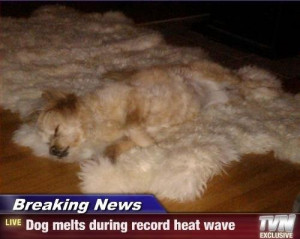 Dog melts during record heat wave