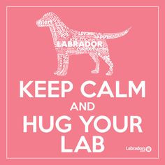 Nothing better to relieve stress! ♥ Labradors.com More