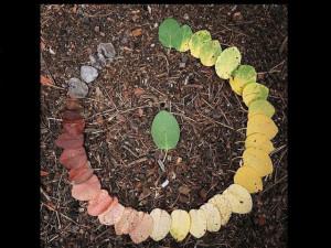THE CIRCLE OF LIFE (LEAF)!!!!!1 random