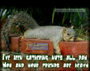 Funny squirrel