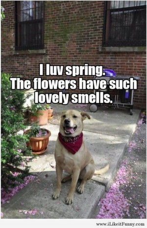 Funny spring picture with a dog