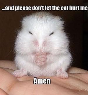 Please Don't Let The Cat Hurt Me