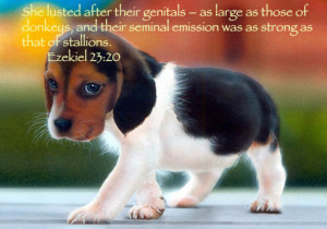 cute quotes about animals bible quotes cute animals