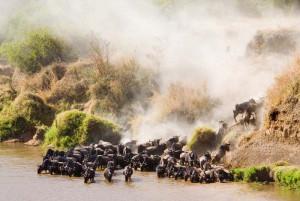 African Safari Closed To People